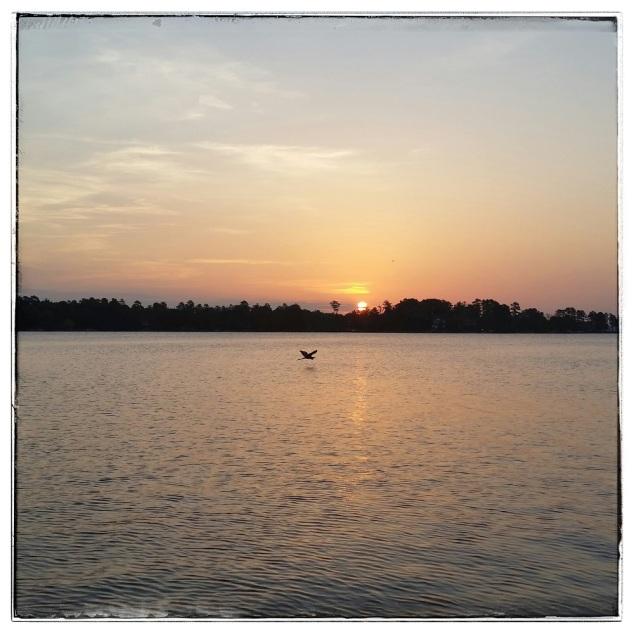 lake sunrise and heron