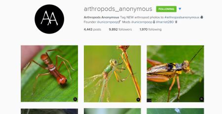 arthropods anonymous